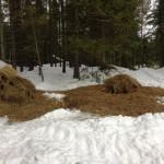 Utfodring februari 2015 – Med snödjup som i februari 2015 betyder troligen utfordring och uppkörda traktorspår i djupsnön mest för viltvården.