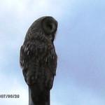 Lappugglan – Där kan man  få se en Lappuggla som  sommaren 2007 hade bo i markerna nära fågeltornet