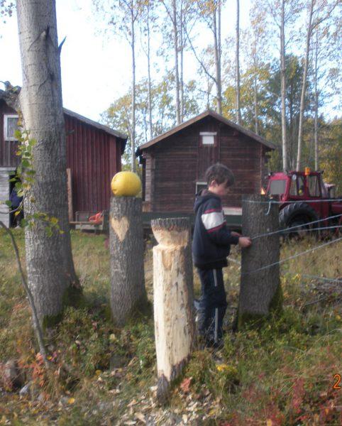 Olof L skapar snörkonstigheter bakom skulpturer med hjärta och pumpa