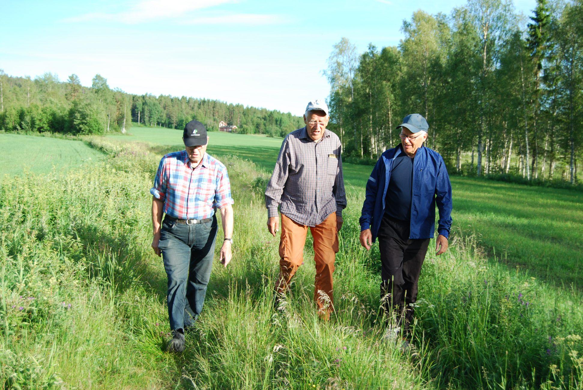 Kjell A, JEP & Torsten P på vandring runt Hökmarksträsket