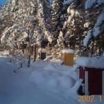 Bina överlever vintern i väl isolerade kupor