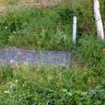 Redan halvåret efter installation blommar vallmo vid ralabrunn