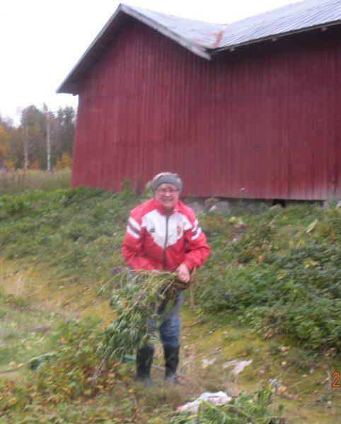 Asta Johansson gör årligen nyutsprickande konst genom att plantera perenner