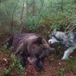 Björnen och Hund
